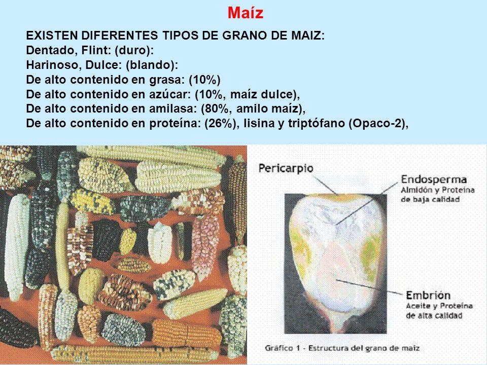 Maíz EXISTEN DIFERENTES TIPOS DE GRANO DE MAIZ: Dentado, Flint: (duro): Harinoso, Dulce: (blando): De alto contenido en grasa: (10%) De alto contenido