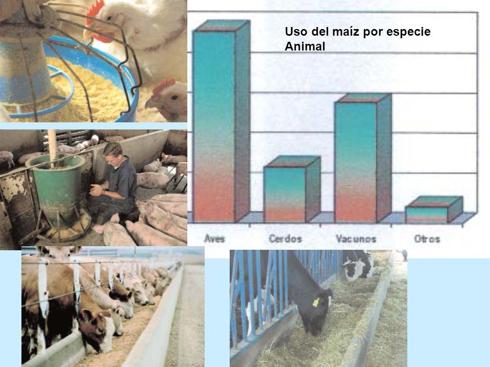 Uso del maíz por especie Animal