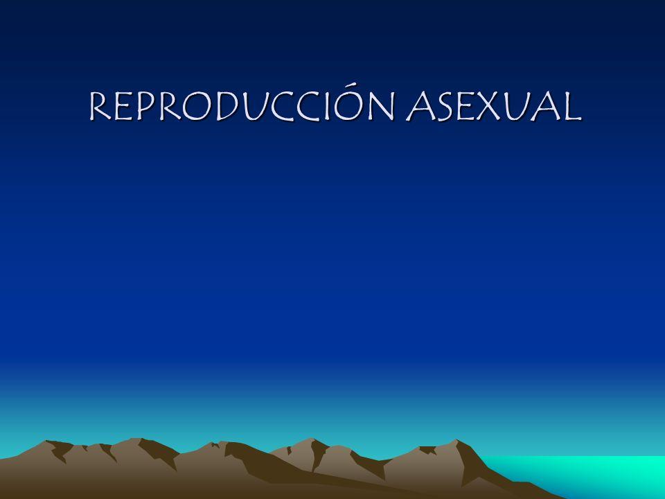 Reproducción Asexual (vegetativa) Reproducción Asexual (vegetativa) 1.Simple división 2.Gemación 3.Fragmentación 4.Esporulación