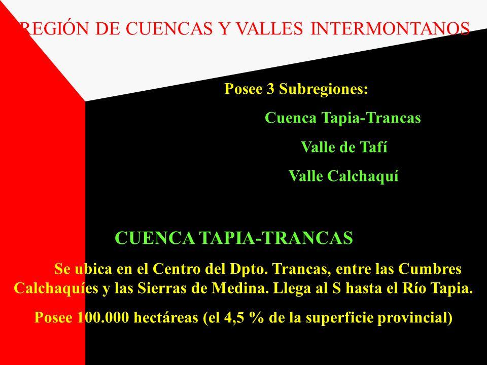 REGIÓN DE CUENCAS Y VALLES INTERMONTANOS Posee 3 Subregiones: Cuenca Tapia-Trancas Valle de Tafí Valle Calchaquí CUENCA TAPIA-TRANCAS Se ubica en el C