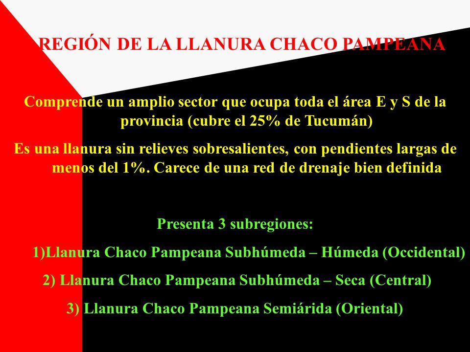 REGIÓN DE LA LLANURA CHACO PAMPEANA Comprende un amplio sector que ocupa toda el área E y S de la provincia (cubre el 25% de Tucumán) Es una llanura s