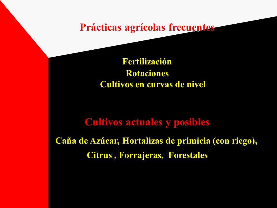 Prácticas agrícolas frecuentes Fertilización Rotaciones Cultivos en curvas de nivel Cultivos actuales y posibles Caña de Azúcar, Hortalizas de primici