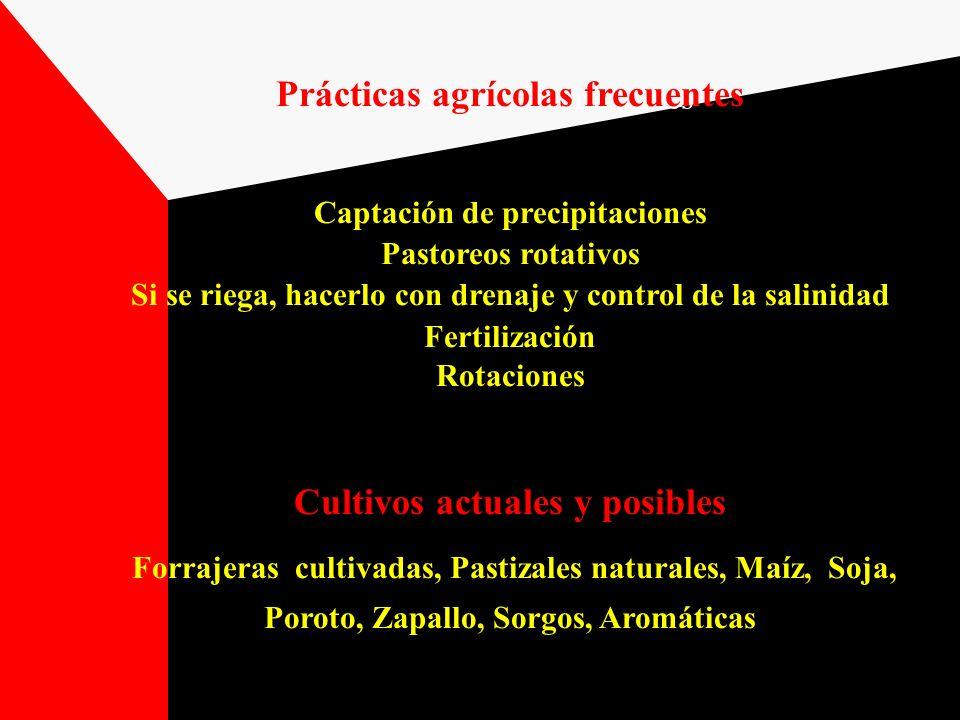 Prácticas agrícolas frecuentes Captación de precipitaciones Pastoreos rotativos Si se riega, hacerlo con drenaje y control de la salinidad Fertilizaci