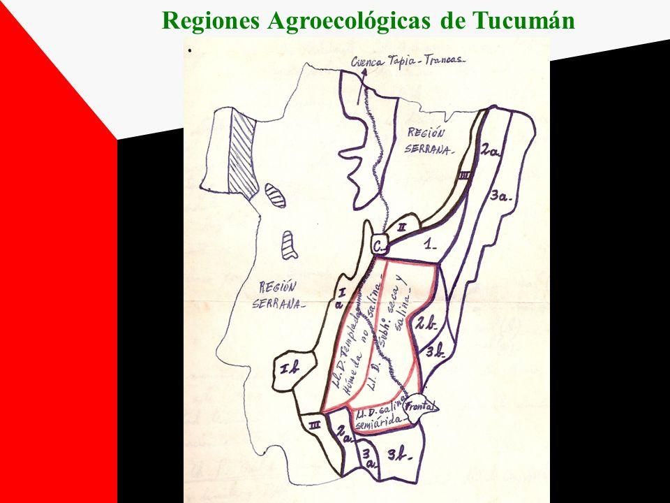 REGIÓN PEDEMONTANA Franja estrecha a lo largo de las Sierras de San Javier y el Aconquija (8% del área provincial) Pendientes del 1 al 5% con dirección NO-SE Tº media anual de 19º C (Enero =25º C; Julio =12º C) Región libre de heladas Subregiones: a) Pedemonte Húmedo y Perhúmedo b) Pedemonte Subhúmedo – Húmedo c) Pedemonte Subhúmedo Seco