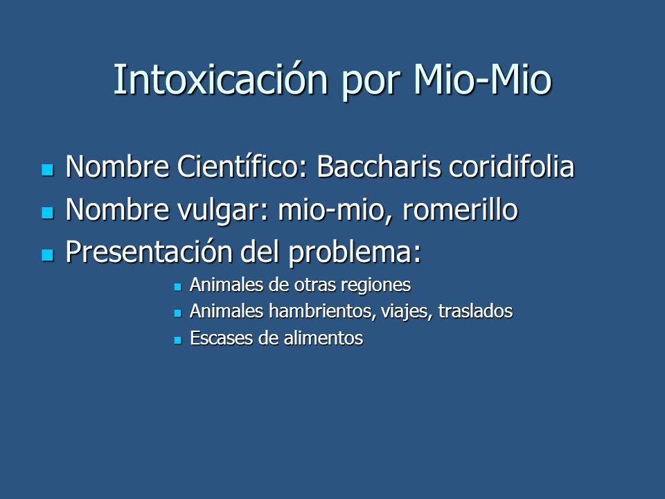 Intoxicación por Mio-Mio Nombre Científico: Baccharis coridifolia Nombre Científico: Baccharis coridifolia Nombre vulgar: mio-mio, romerillo Nombre vu