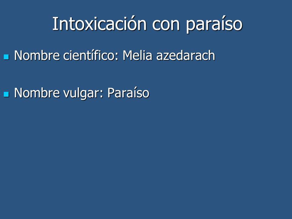 Nombre científico: Melia azedarach Nombre científico: Melia azedarach Nombre vulgar: Paraíso Nombre vulgar: Paraíso