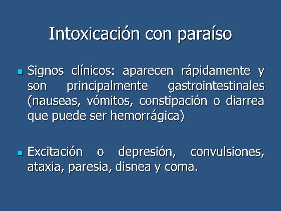 Intoxicación con paraíso Signos clínicos: aparecen rápidamente y son principalmente gastrointestinales (nauseas, vómitos, constipación o diarrea que p