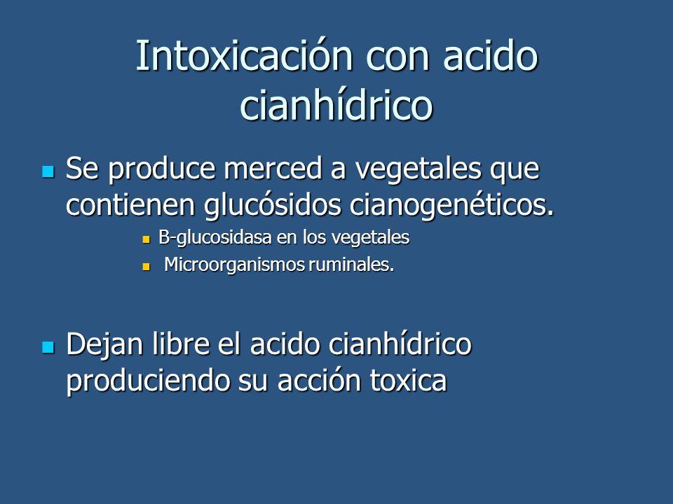 Intoxicación con acido cianhídrico Se produce merced a vegetales que contienen glucósidos cianogenéticos. Se produce merced a vegetales que contienen