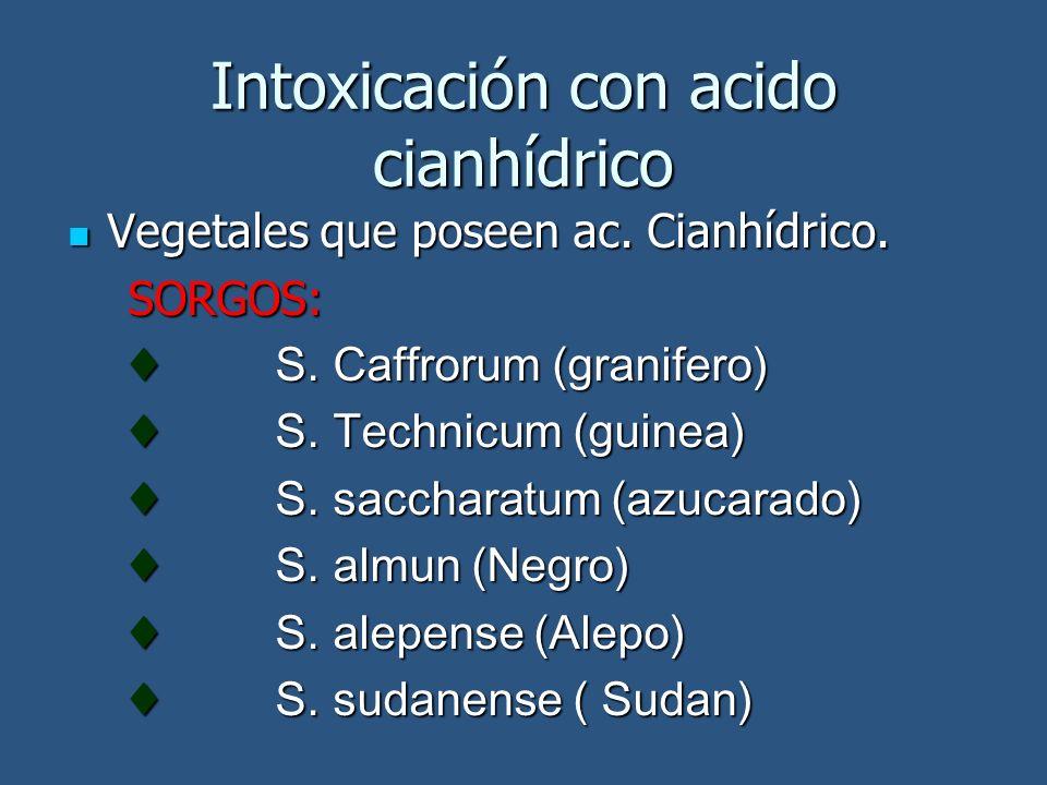Intoxicación con acido cianhídrico Vegetales que poseen ac. Cianhídrico. Vegetales que poseen ac. Cianhídrico.SORGOS: S. Caffrorum (granifero) S. Caff