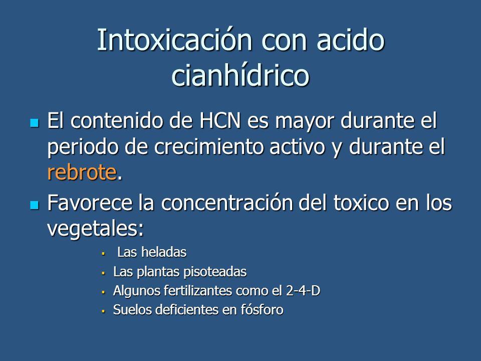 Intoxicación con acido cianhídrico El contenido de HCN es mayor durante el periodo de crecimiento activo y durante el rebrote. El contenido de HCN es