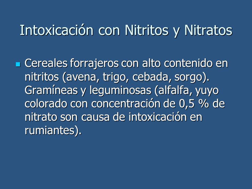Intoxicación con Nitritos y Nitratos Cereales forrajeros con alto contenido en nitritos (avena, trigo, cebada, sorgo). Gramíneas y leguminosas (alfalf