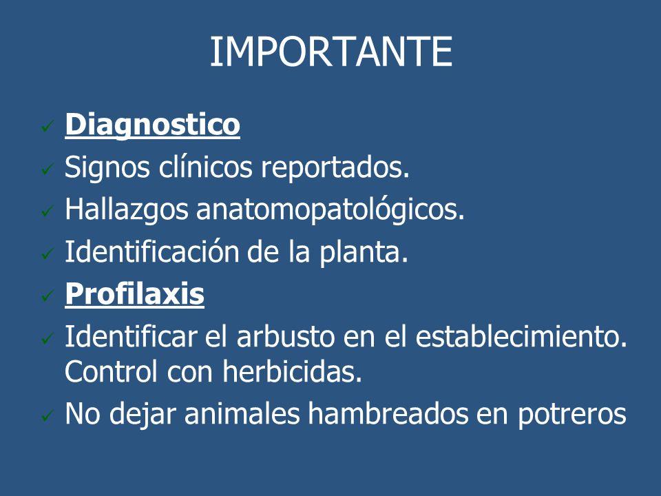 IMPORTANTE Diagnostico Signos clínicos reportados. Hallazgos anatomopatológicos. Identificación de la planta. Profilaxis Identificar el arbusto en el