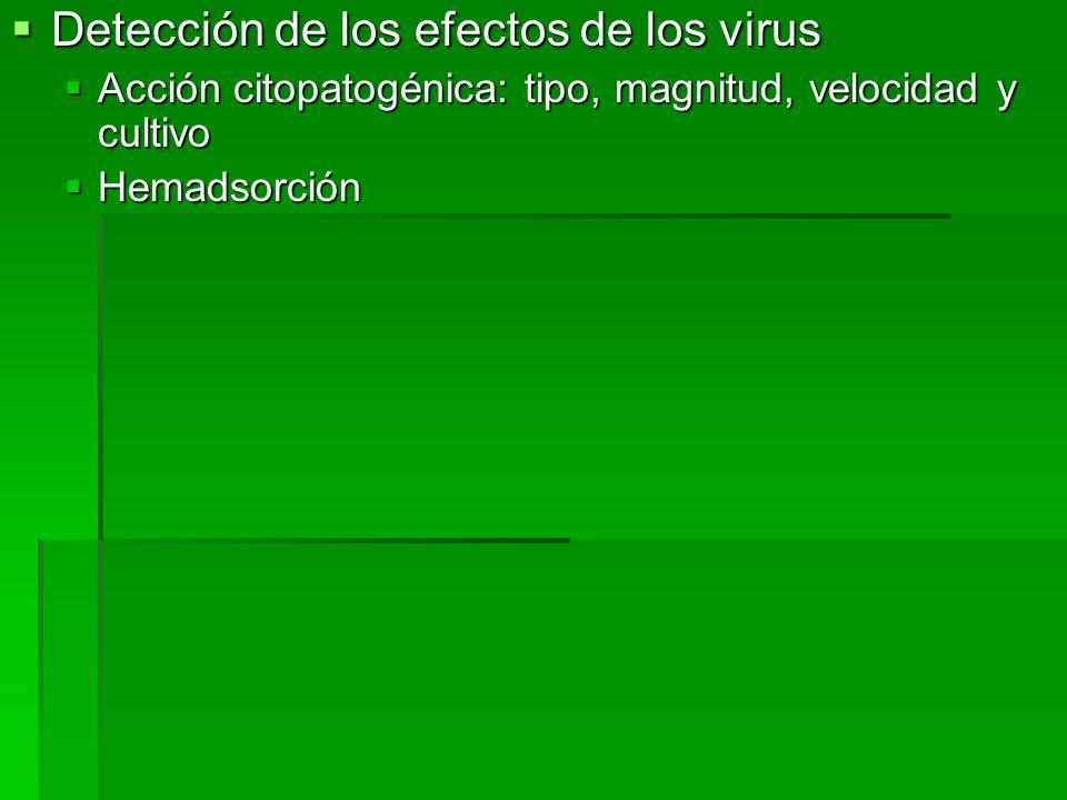 Detección de los efectos de los virus Detección de los efectos de los virus Acción citopatogénica: tipo, magnitud, velocidad y cultivo Acción citopato