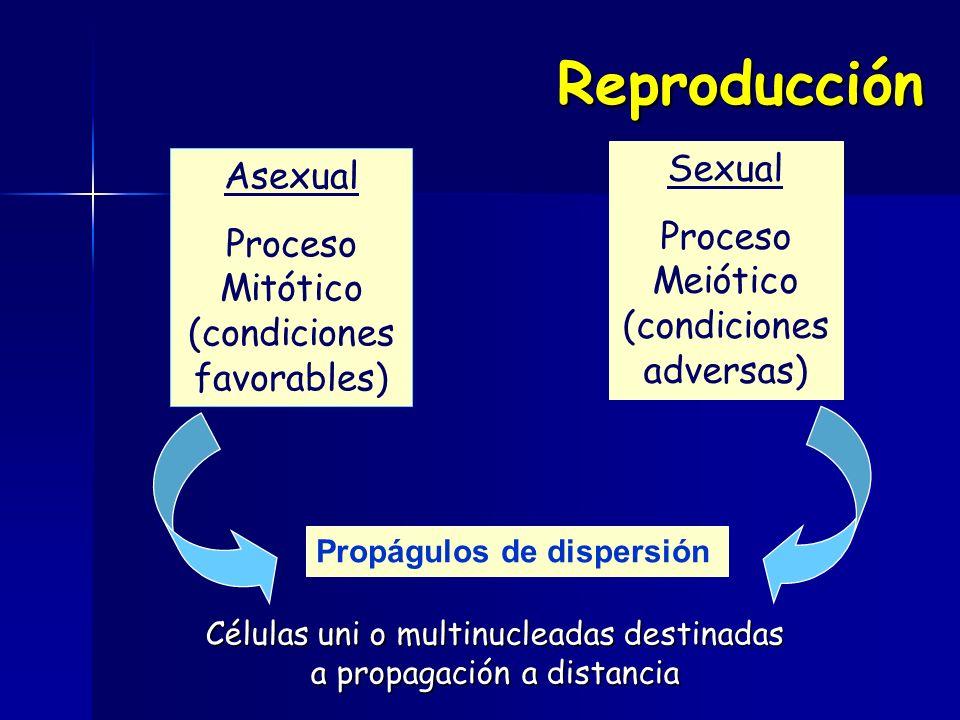 Reproducción Asexual Proceso Mitótico (condiciones favorables) Sexual Proceso Meiótico (condiciones adversas) Propágulos de dispersión Células uni o m