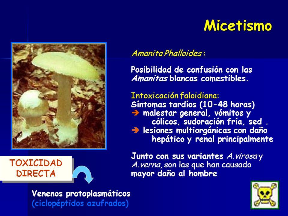 Amanita Phalloides : Posibilidad de confusión con las Amanitas blancas comestibles. Intoxicación faloidiana: Síntomas tardíos (10-48 horas) malestar g