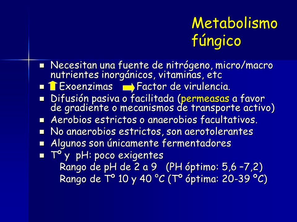 Micotoxicosis Aflatoxinas Sterigamatocistinas Ocratoxinas Géneros : Aspergillus Fusarium Penicillium Zearalenonas Tricotecenos Patulina Luteoskinina Consumo de alimentos contaminados con toxinas de hongos