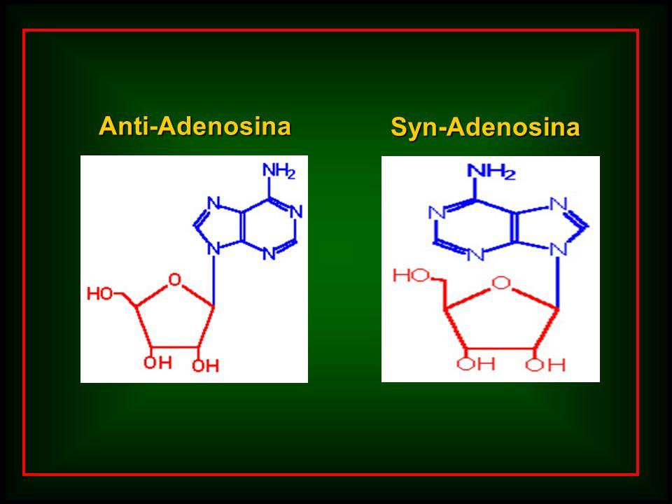 Syn-Adenosina Anti-Adenosina