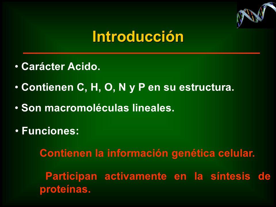 Participan activamente en la síntesis de proteínas. Introducción Carácter Acido. Contienen C, H, O, N y P en su estructura. Son macromoléculas lineale