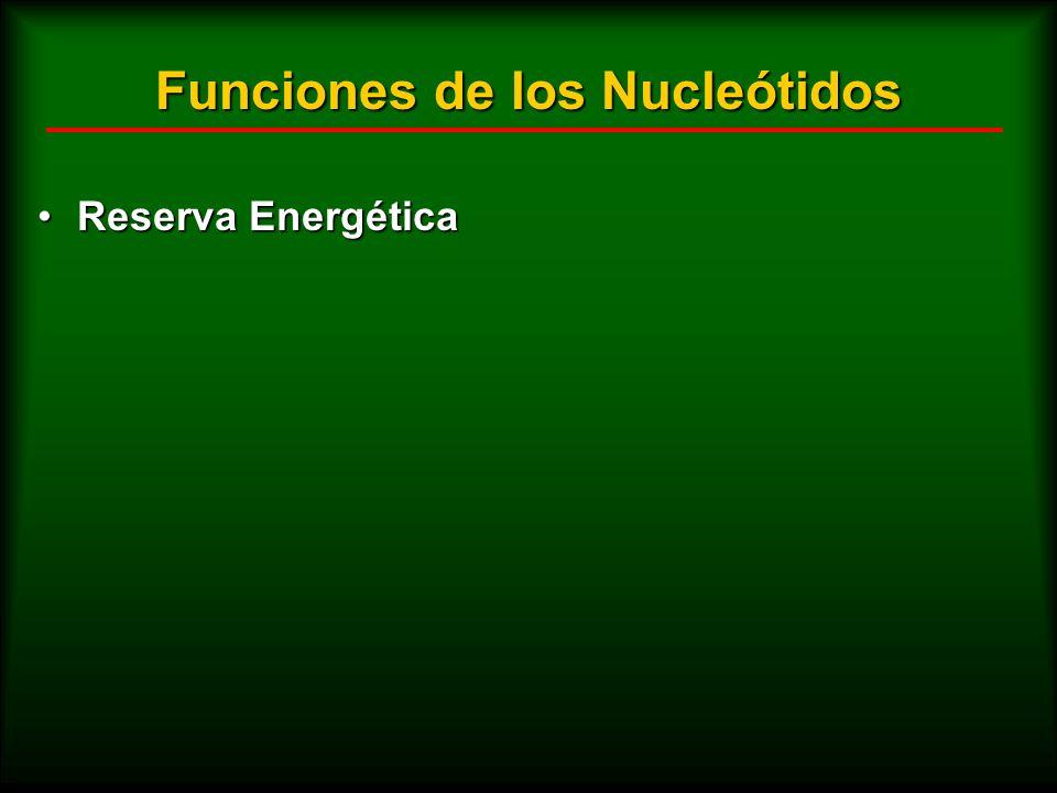 Funciones de los Nucleótidos Reserva EnergéticaReserva Energética