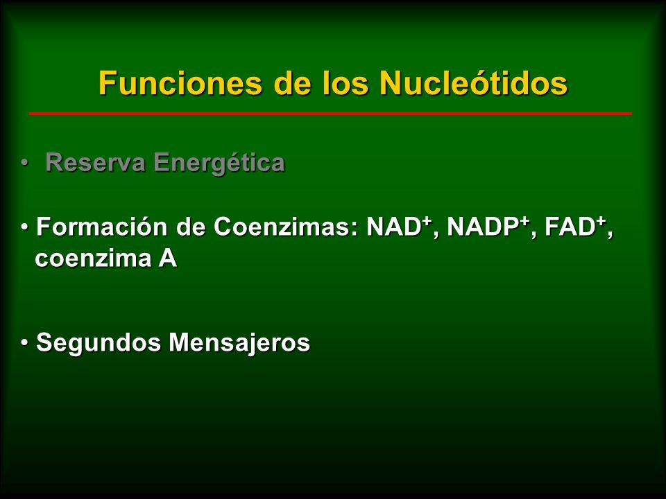 Funciones de los Nucleótidos Reserva EnergéticaReserva Energética Formación de Coenzimas: NAD +, NADP +, FAD +, Formación de Coenzimas: NAD +, NADP +,