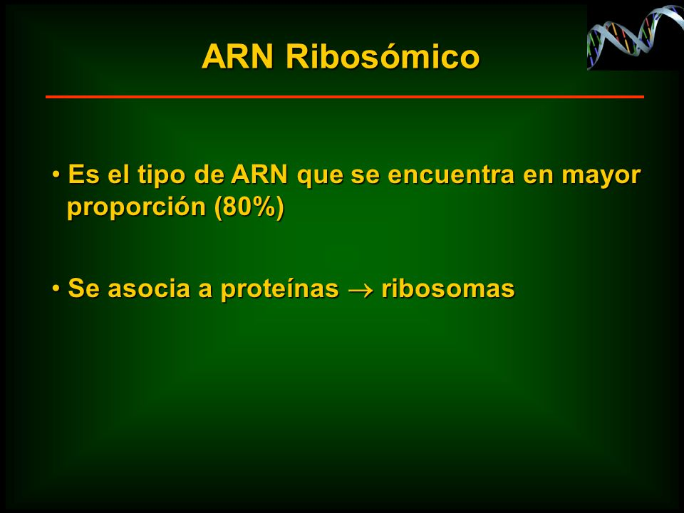 ARN Ribosómico Es el tipo de ARN que se encuentra en mayor Es el tipo de ARN que se encuentra en mayor proporción (80%) proporción (80%) Se asocia a p