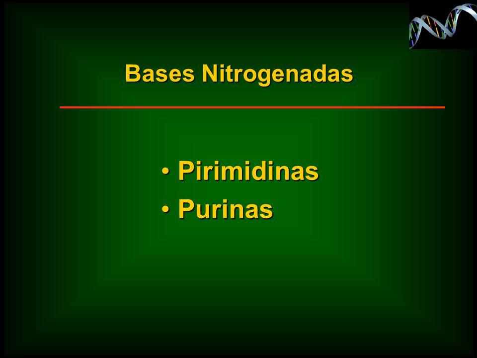 Bases Nitrogenadas Purinas Purinas Pirimidinas Pirimidinas