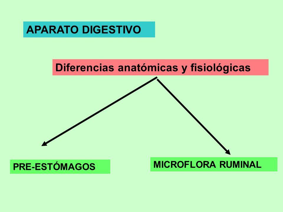 Diferencias anatómicas y fisiológicas APARATO DIGESTIVO PRE-ESTÓMAGOS MICROFLORA RUMINAL