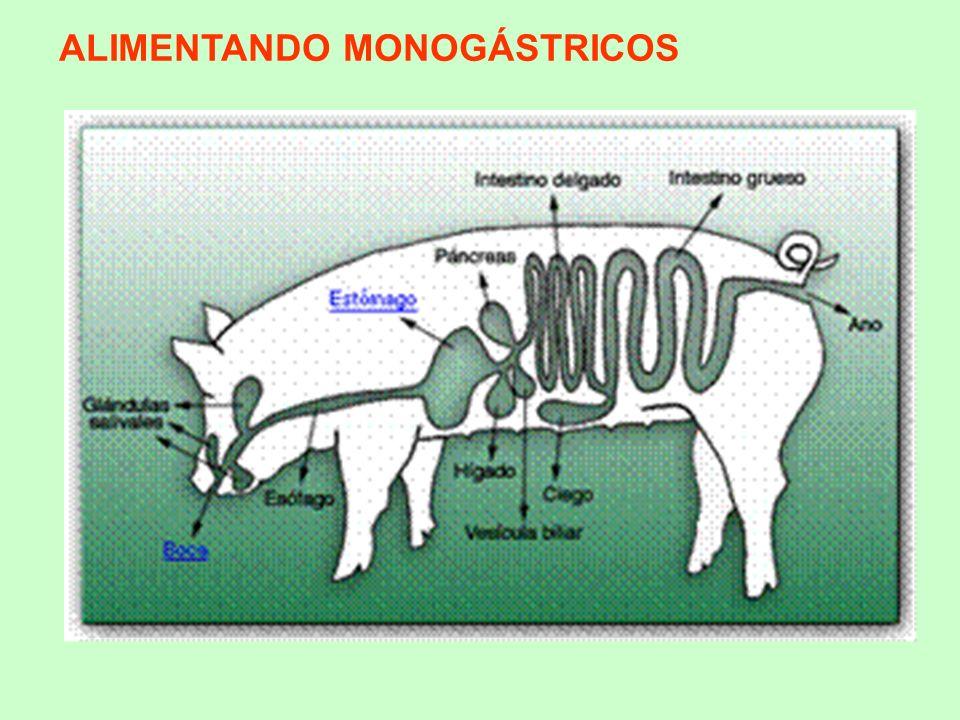 Omnívoros (cerdo) presentan: Alimentación intermedia (animal y vegetal) Tubo digestivo de estructura y tamaño intermedio Cierta actividad microbiana en el intestino grueso Muy poco eficientes al digerir los carbohidratos estructurales presentes en las plantas (Celulosa, Hemicelulosa y Pectina).