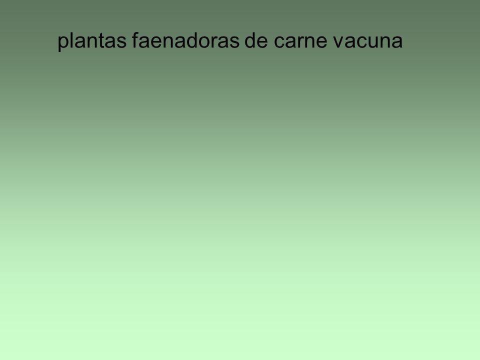 plantas faenadoras de carne vacuna