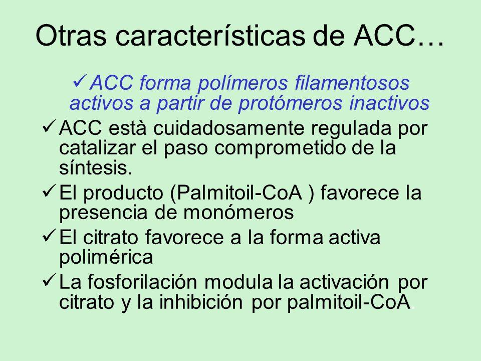 Otras características de ACC… ACC forma polímeros filamentosos activos a partir de protómeros inactivos ACC està cuidadosamente regulada por catalizar