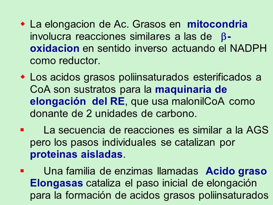 La elongacion de Ac. Grasos en mitocondria involucra reacciones similares a las de - oxidacion en sentido inverso actuando el NADPH como reductor. Los