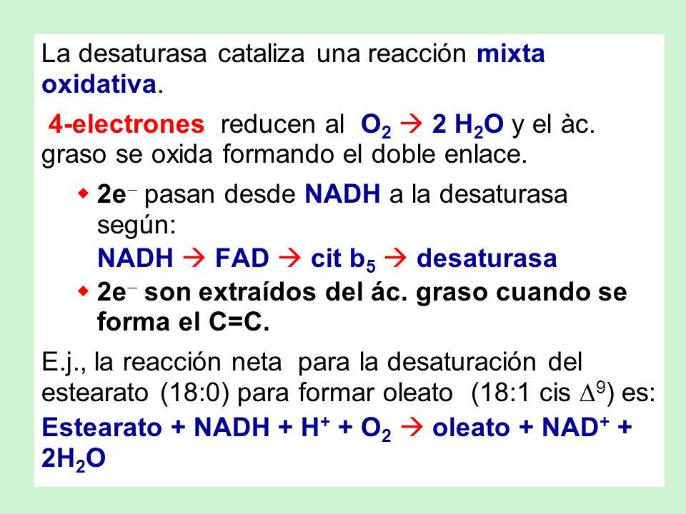 La desaturasa cataliza una reacción mixta oxidativa. 4-electrones reducen al O 2 2 H 2 O y el àc. graso se oxida formando el doble enlace. 2e pasan de