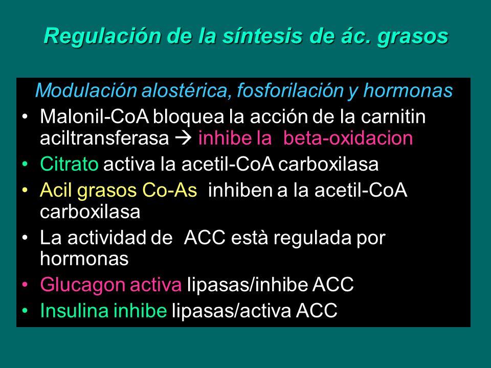 Regulación de la síntesis de ác. grasos Modulación alostérica, fosforilación y hormonas Malonil-CoA bloquea la acción de la carnitin aciltransferasa i