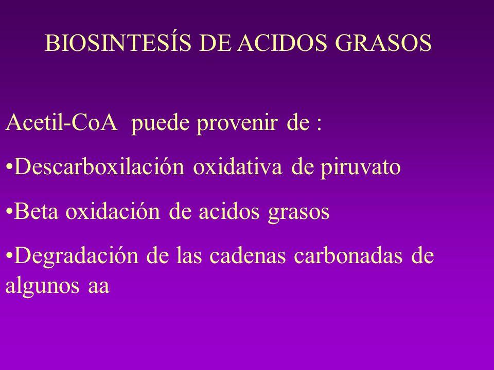 BIOSINTESÍS DE ACIDOS GRASOS Acetil-CoA puede provenir de : Descarboxilación oxidativa de piruvato Beta oxidación de acidos grasos Degradación de las