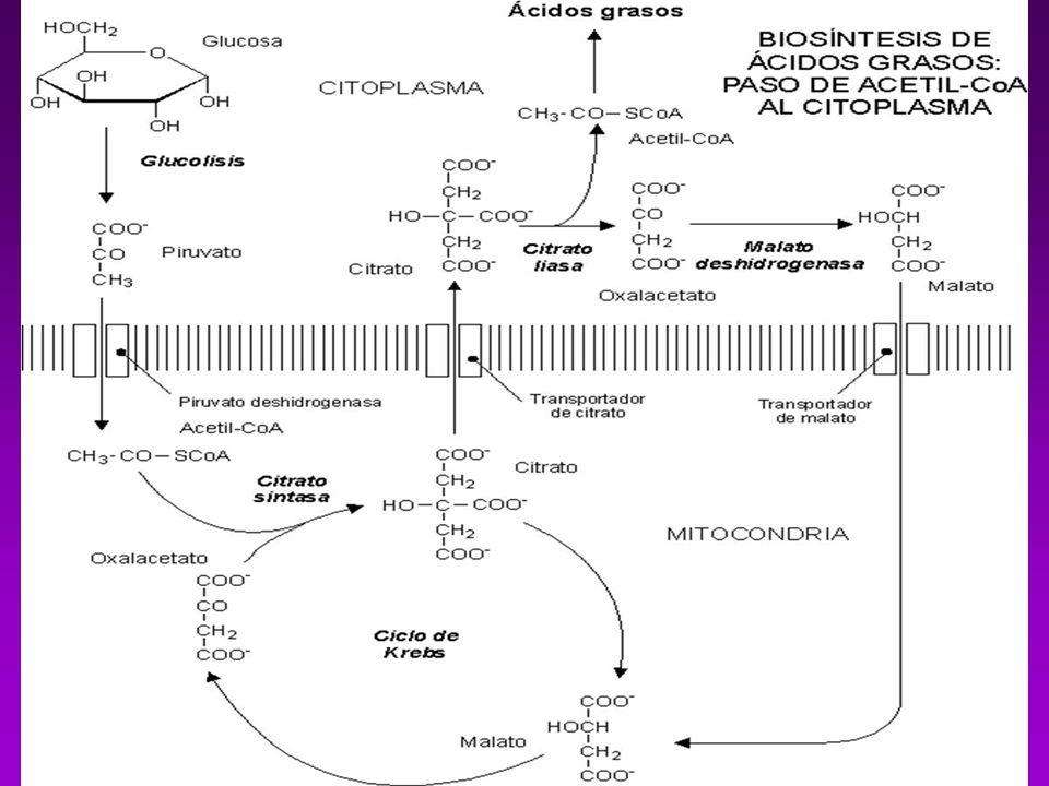 CATABOLISMO DE COLESTEROL El organismo carece de enzimas para degradar al ciclopentanoperhidrofenantreno Se elimina a través del Hígado una parte se transforma en ácidos biliares.