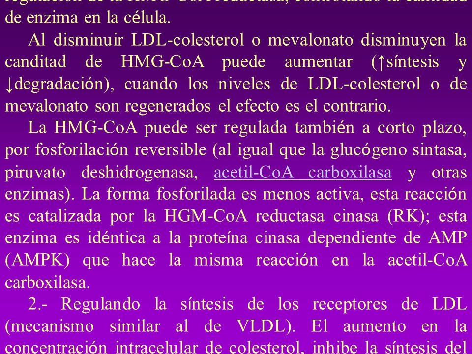 S í ntesis de colesterol: se regula en general mediante tres v í as: 1.- Modulando la actividad de la HMG-CoA reductasa, enz paso limitante en la s í