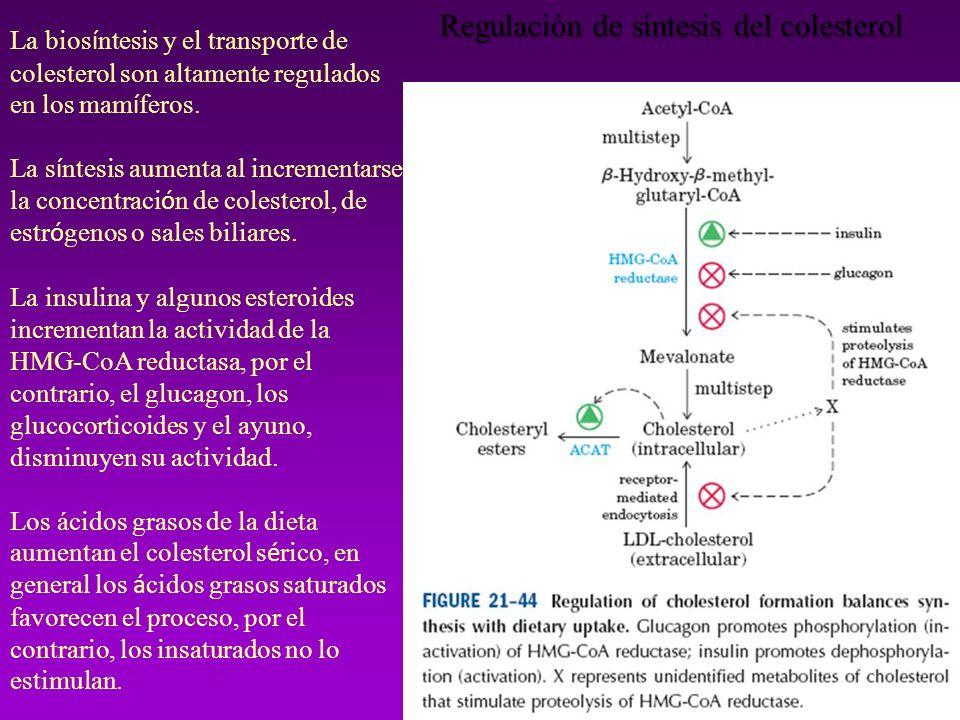 La bios í ntesis y el transporte de colesterol son altamente regulados en los mam í feros. La s í ntesis aumenta al incrementarse la concentraci ó n d