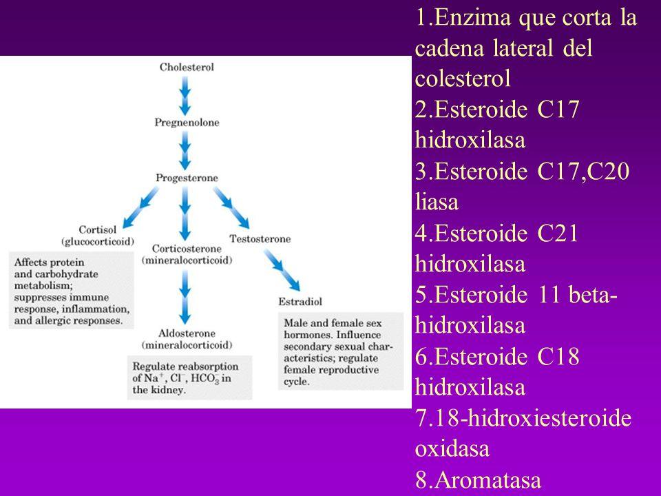 En la bios í ntesis de los esteroides hay siete pasos y ocho enzimas que se listan a continuaci ó n: 1.Enzima que corta la cadena lateral del colester