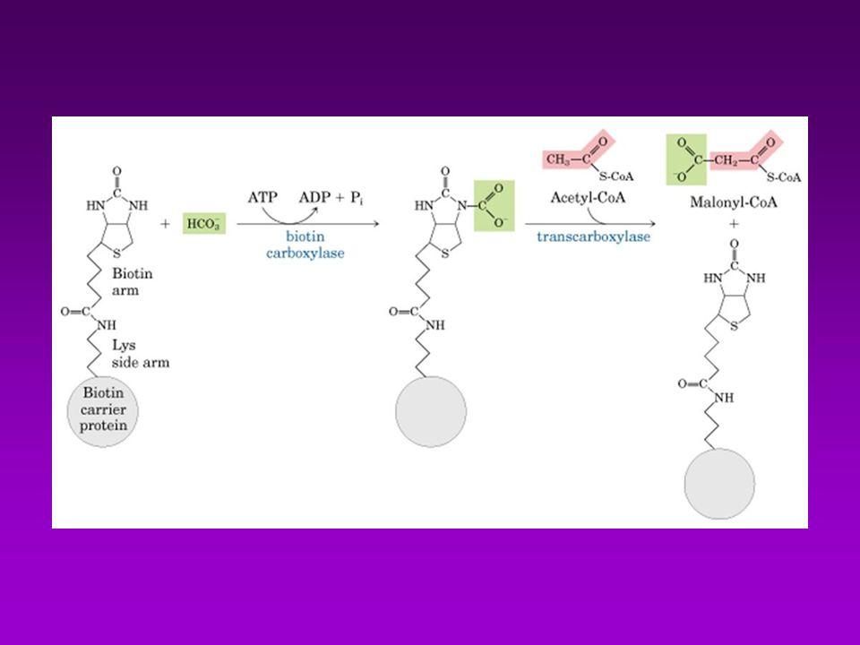 S í ntesis de colesterol: se regula en general mediante tres v í as: 1.- Modulando la actividad de la HMG-CoA reductasa, enz paso limitante en la s í ntesis de novo: la inhibici ó n de corto plazo puede ser a.- competitiva.
