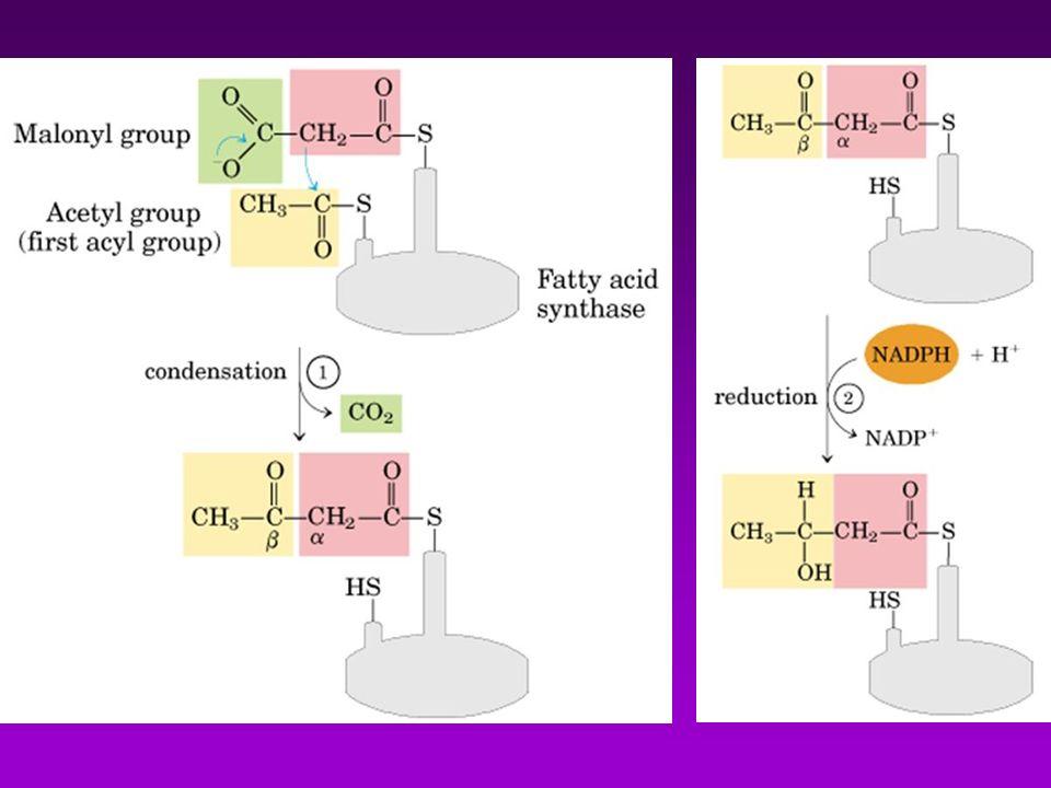 La bios í ntesis y el transporte de colesterol son altamente regulados en los mam í feros.