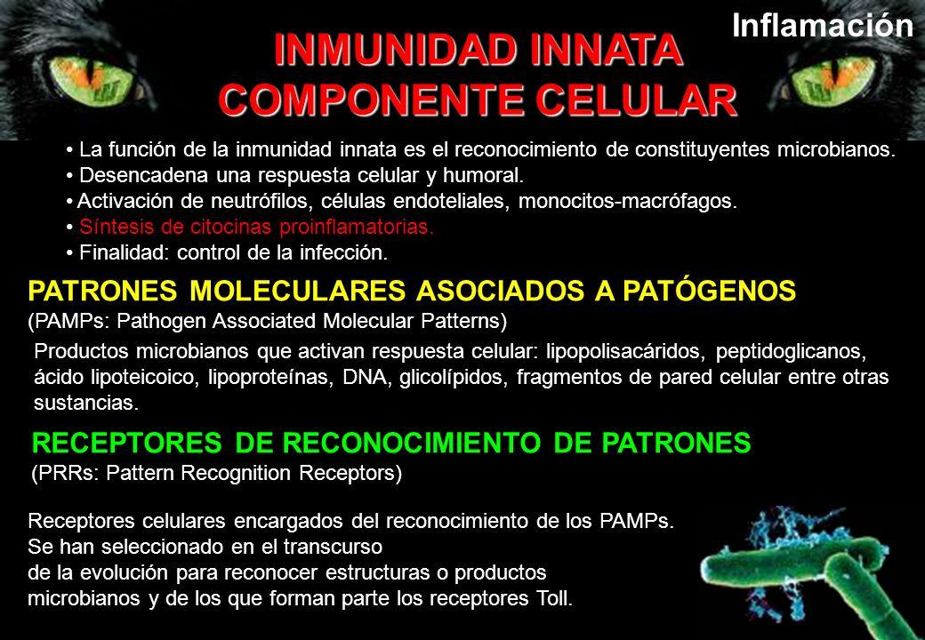 La función de la inmunidad innata es el reconocimiento de constituyentes microbianos. Desencadena una respuesta celular y humoral. Activación de neutr