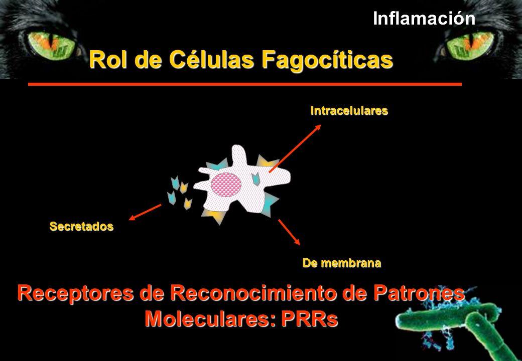 Rol de Células Fagocíticas De membrana Secretados Receptores de Reconocimiento de Patrones Moleculares: PRRs Intracelulares Inflamación