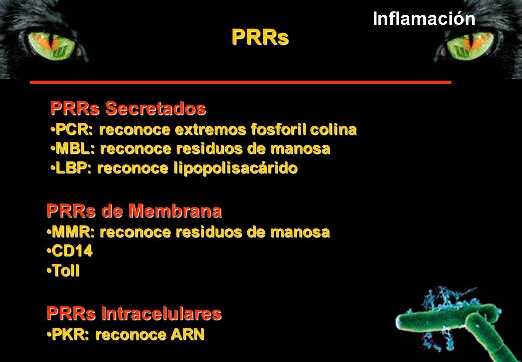 PRRs PRRs Secretados PCR: reconoce extremos fosforil colinaPCR: reconoce extremos fosforil colina MBL: reconoce residuos de manosaMBL: reconoce residu