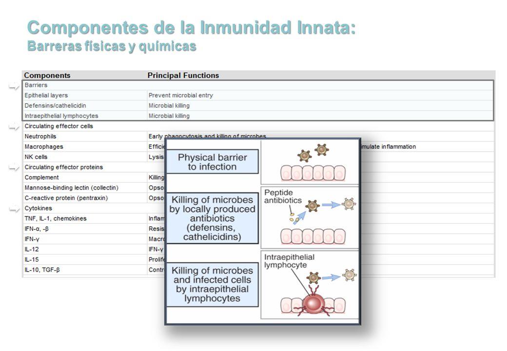 Componentes de la Inmunidad Innata: Barreras físicas y químicas