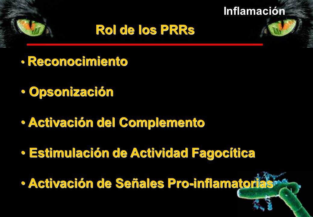 Rol de los PRRs Reconocimiento Reconocimiento Opsonización Opsonización Activación del Complemento Activación del Complemento Estimulación de Activida