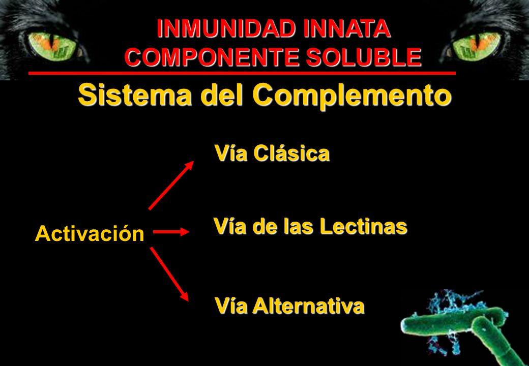 INMUNIDAD INNATA COMPONENTE SOLUBLE Sistema del Complemento Activación Vía Clásica Vía de las Lectinas Vía Alternativa
