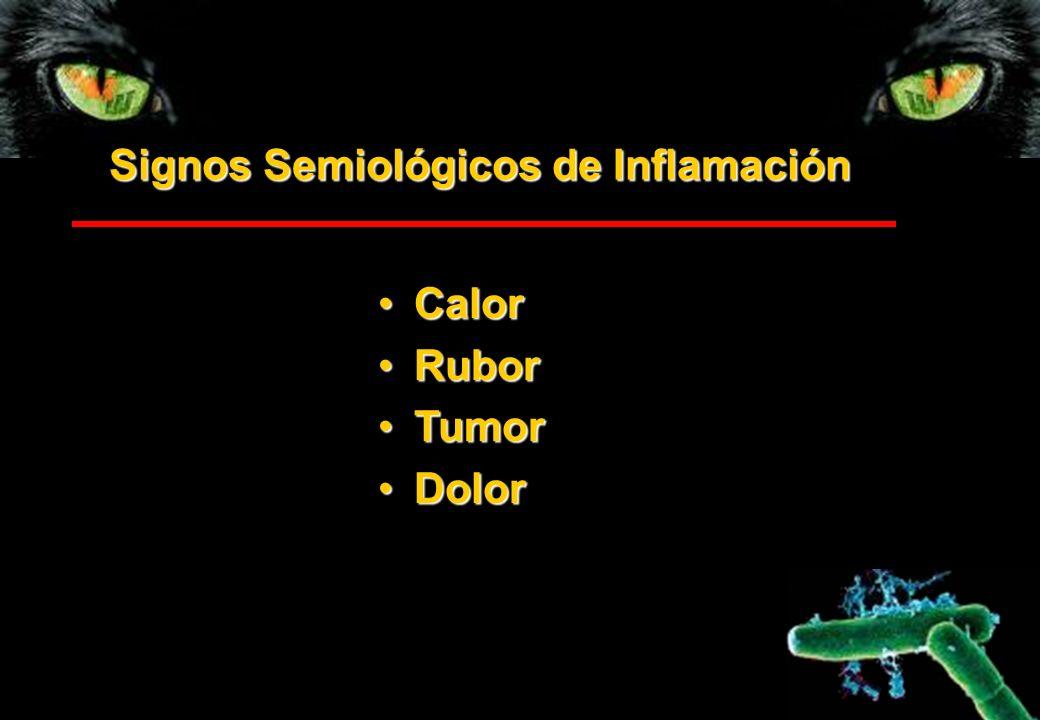 Signos Semiológicos de Inflamación CalorCalor RuborRubor TumorTumor DolorDolor