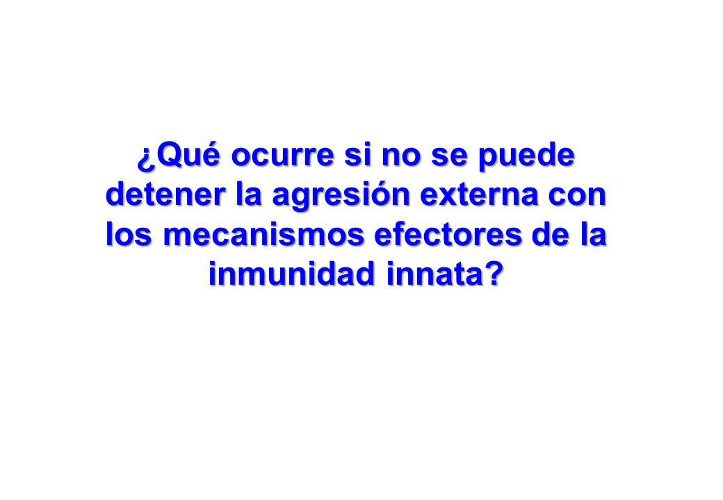 ¿Qué ocurre si no se puede detener la agresión externa con los mecanismos efectores de la inmunidad innata?