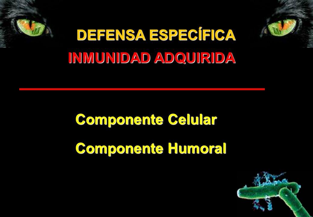 Componente Celular Componente Humoral INMUNIDAD ADQUIRIDA DEFENSA ESPECÍFICA