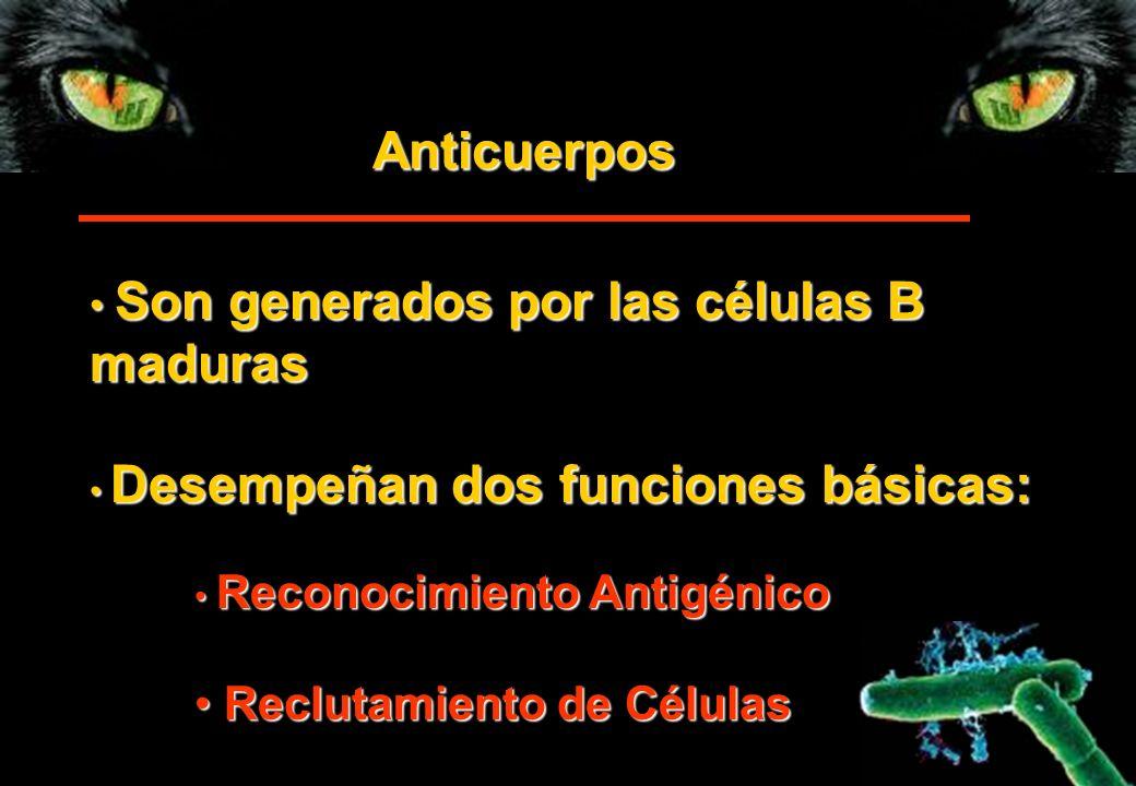 Anticuerpos Son generados por las células B Son generados por las células Bmaduras Desempeñan dos funciones básicas: Desempeñan dos funciones básicas: